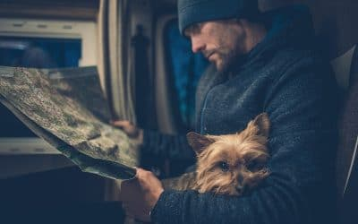 Grand Solmar Timeshare Provides Guidelines For Traveling With Pets